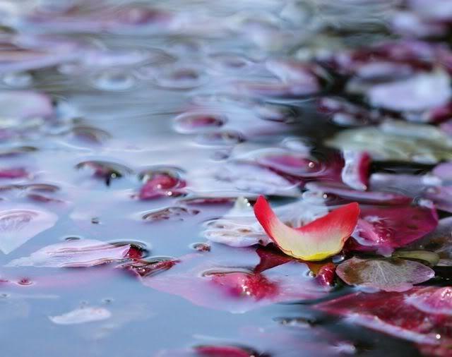 Hacer agua de Rosas receta